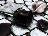 Black_and_White_Rose_by_archerx